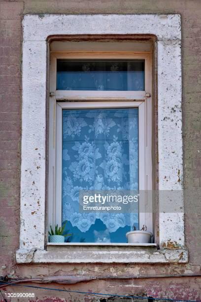 cat looking from the window. - emreturanphoto stock-fotos und bilder
