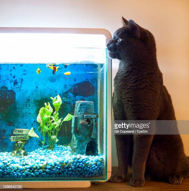 Cat Looking In Fish Tank While Sitting At Home