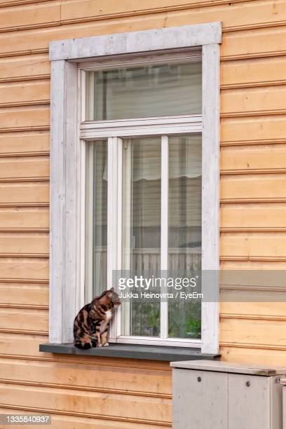 cat looking in - heinovirta stock pictures, royalty-free photos & images