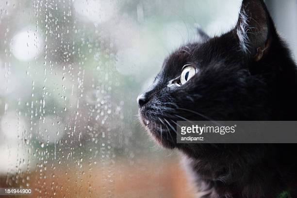 cat looking out a window - cat family stock pictures, royalty-free photos & images