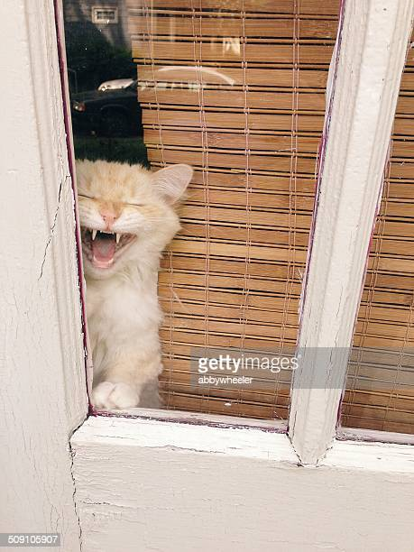 cat looking out of window - territory stock pictures, royalty-free photos & images
