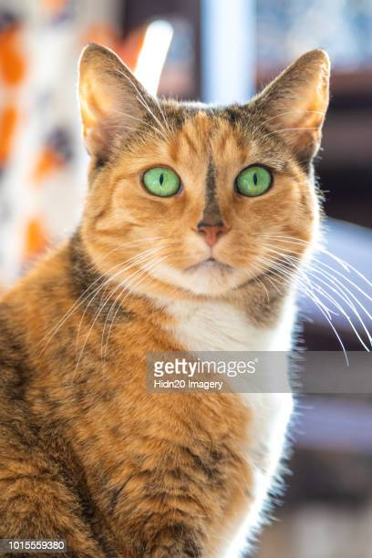 cat looking - green eyes stock pictures, royalty-free photos & images
