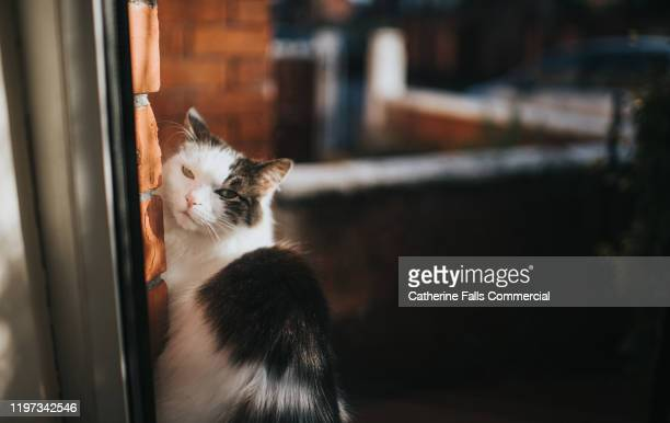 cat looking through a window - pets stock pictures, royalty-free photos & images