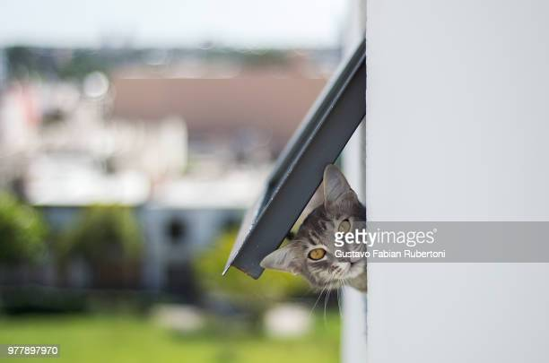 cat looking through cat flap - curiosity stock pictures, royalty-free photos & images