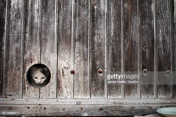 Cat Looking Through Hole In Wood