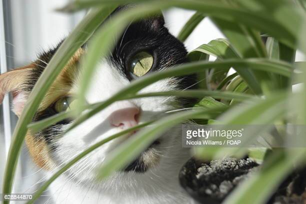 A cat looking through spider plant