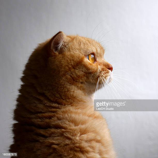 Cat looking towards light