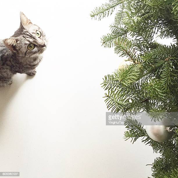 Cat looking up at Christmas tree with silver bauble