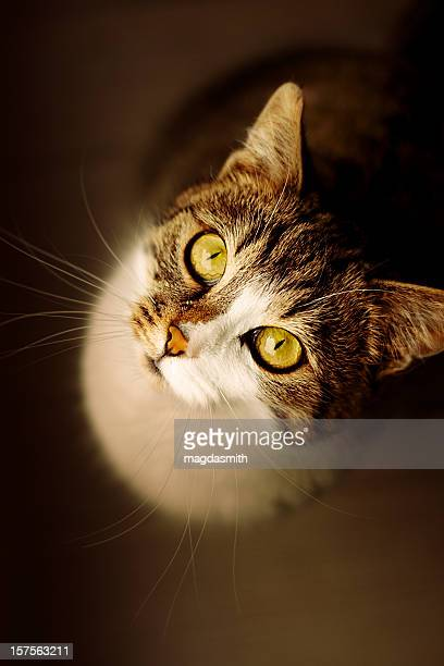 cat looking up - magdasmith stock pictures, royalty-free photos & images