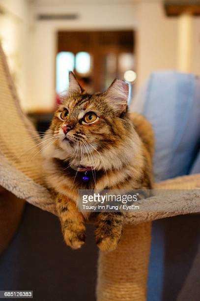 Cat Looking Up While Relaxing On Scratching Post At Home