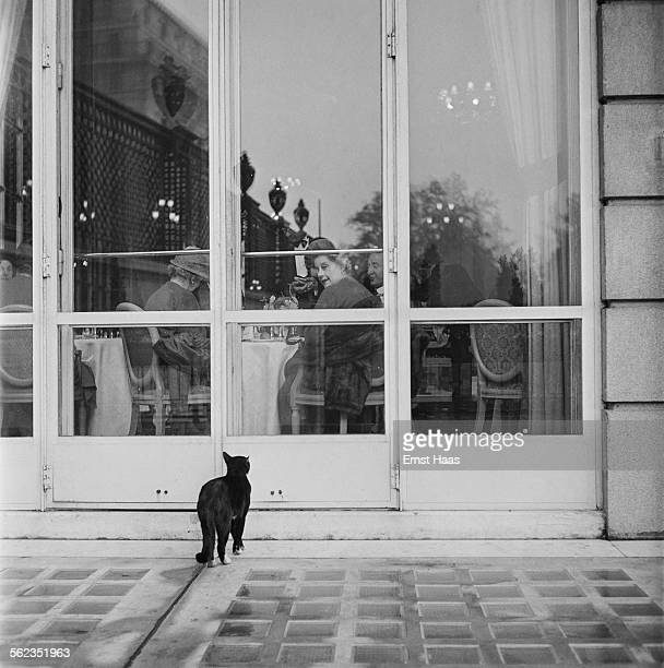 Cat looks at diners through a restaurant window near Piccadilly, London, circa 1953.