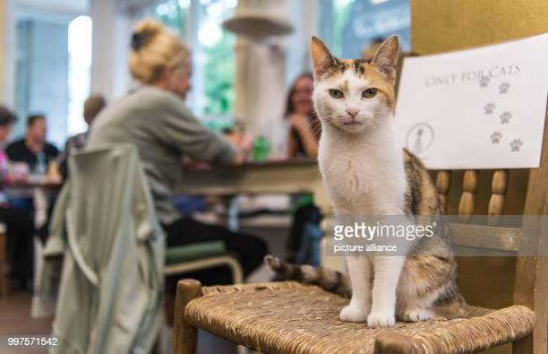 A cat looks into the camera at the first ever Cat Café of Hamburg Germany 27 July 2017 After Nuremberg and Munich the city of Hamburg may now also...