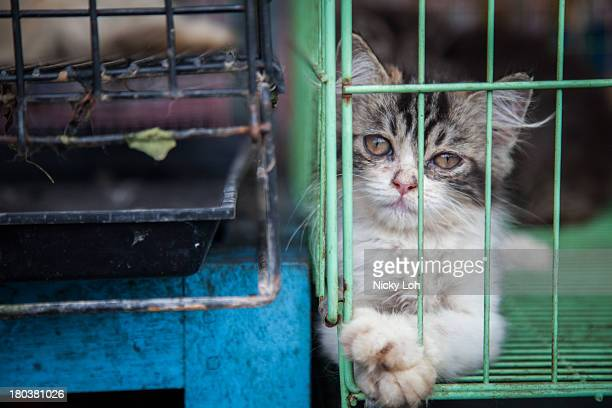 A cat looks out from a cage at the Denpasar Bird Market on May 28 2013 in Denpasar Bali Indonesia World Society for the Protection of Animals...