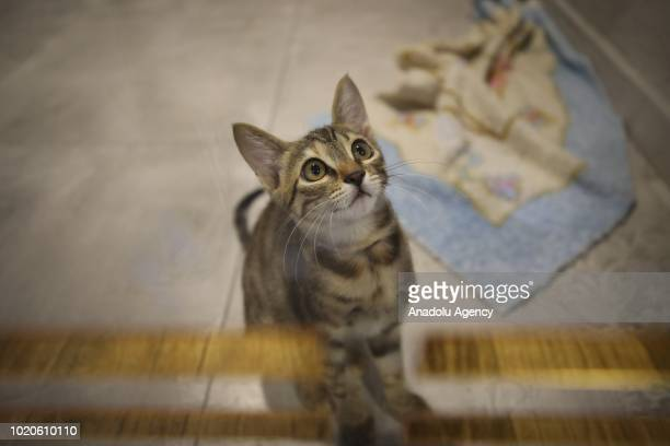 A cat looks up at a Cat Pet Hotel in Bursa Turkey on August 21 2018 Hotel has total of 32 separate standard luxury and suit rooms for each cat Suit...