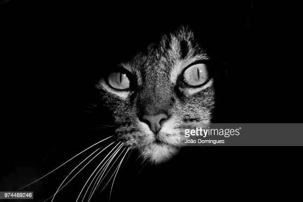 cat lurking in shadows, portugal - images fotografías e imágenes de stock
