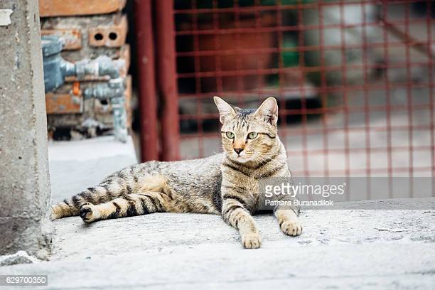 cat lying at the house gate