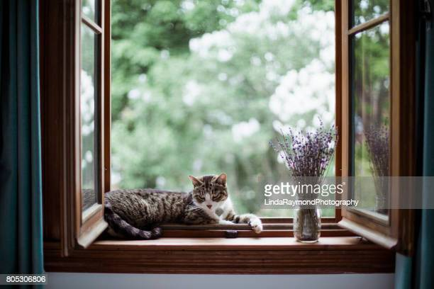 A cat lying down by a window with a bouquet of lavender