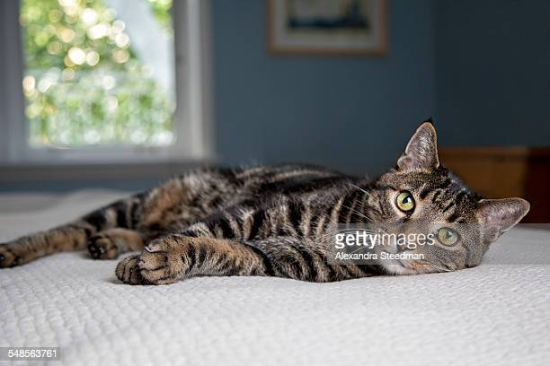 Cat lying down on bed
