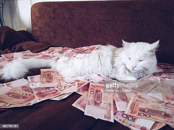 Cat Lying Down On Bed With Paper Currency