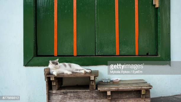 Cat Lying Down On Table Against Window