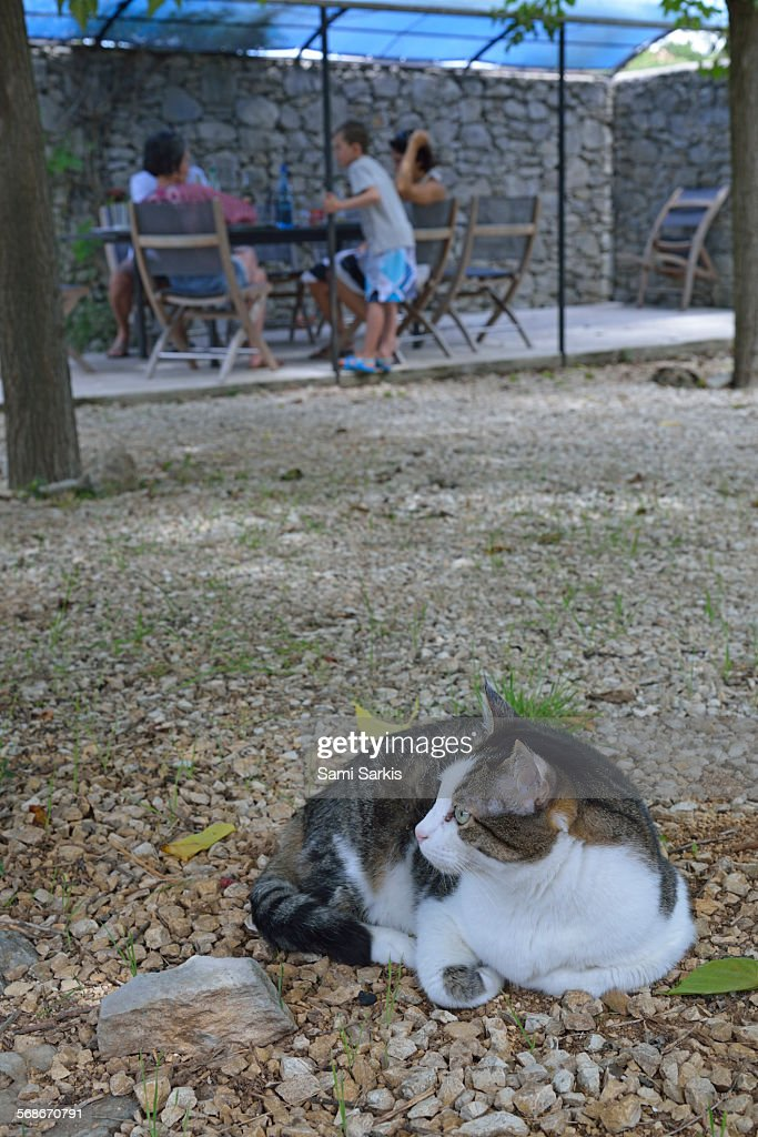 Cat lying in garden : Stock Photo