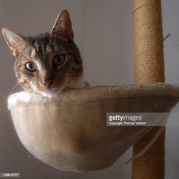 Cat lying in hollow