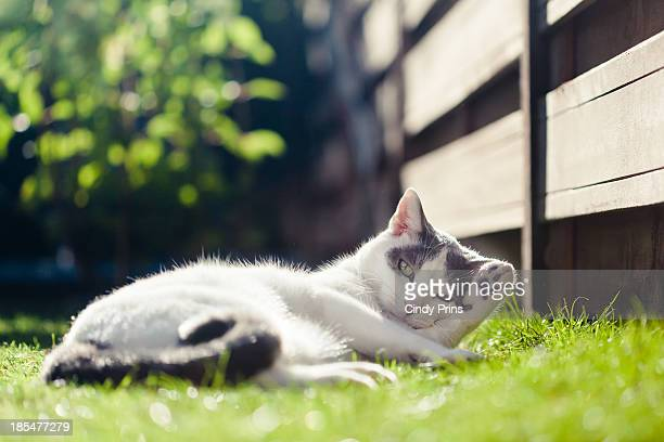 Cat lying in the grass in the garden