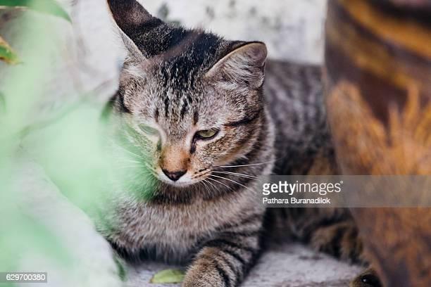 cat lying near the plant pot