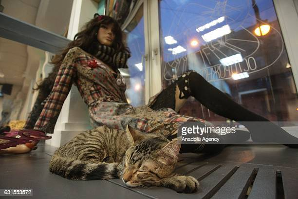 A cat lying near window at the Europe's biggest Cat Cafe opened in St Petersburg on January 12 Russia The cat cafe called ''Cat Republic'' home to 60...