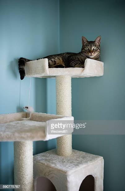 Cat lying on a scratching post at home