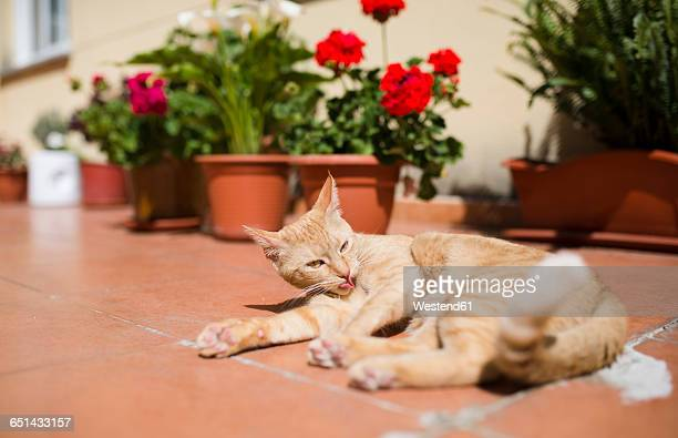 Cat lying on a terrace at sunny day