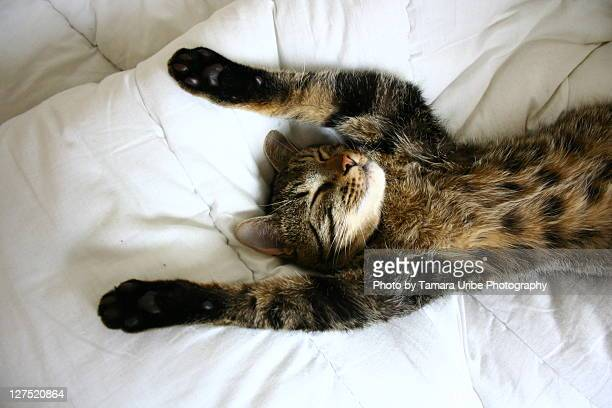 Cat lying on bed