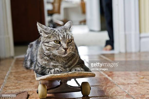 cat lying on skateboard - irony stockfoto's en -beelden