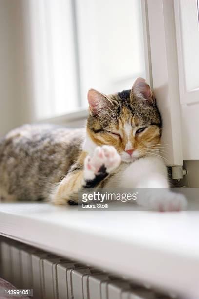 Cat lying on windowsill