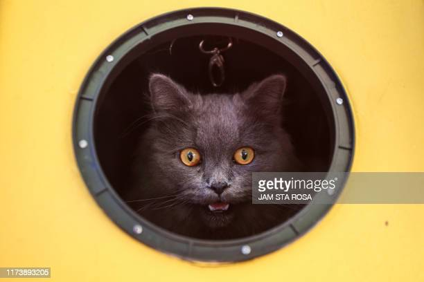 TOPSHOT A cat meows while looking out from its carrier as animals and their owners gather at Our Ladies of Remedies Parish in the Malate area of...