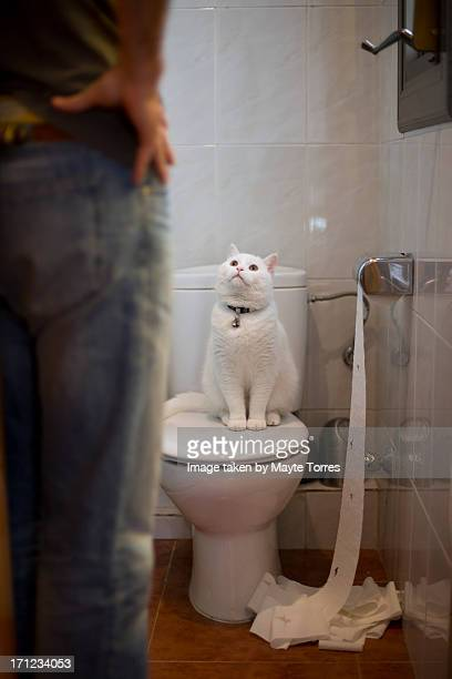 Cat misbehaving in toilet