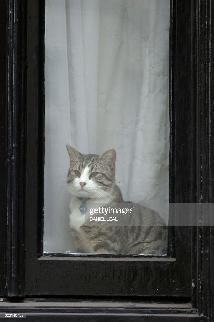 A cat named 'James' looks out of the window of the Ecuadorian Embassy in London on November 14, 2016 where WikiLeaks founder Julian Assange was being questioned over a rape allegation against him. WikiLeaks founder Julian Assange faces questioning by prosecutors on November 14 at the Ecuadoran embassy in London in a twist in the long-running legal battle over a rape allegation against him. An Ecuadoran prosecutor will quiz the founder of the secret-spilling website at the red-brick building where he has been holed up for more than four years, with Swedish prosecutor Ingrid Isgren and a Swedish police inspector also attending, officials said. OLIVAS