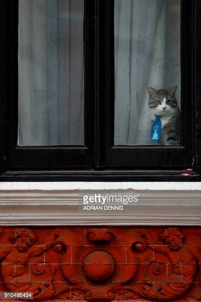 A cat named 'James' wearing a collar and tie looks out of the window of the Ecuadorian Embassy in London on January 26 2018 where WikiLeaks founder...