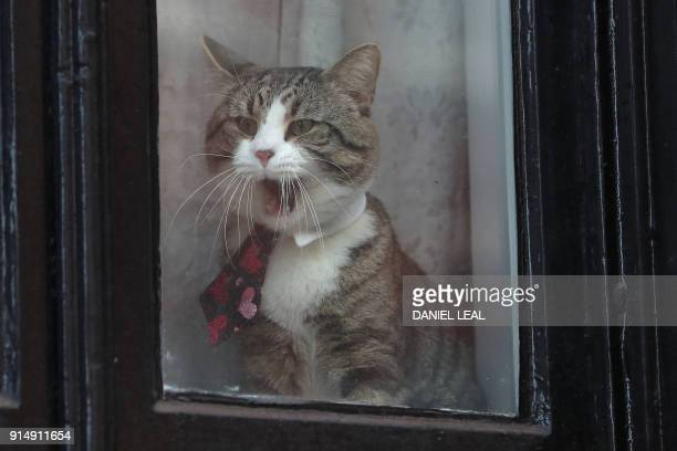 A cat named 'James' wearing a collar and tie looks out of the window of the Ecuadorian Embassy where WikiLeaks founder Julian Assange has been holed...