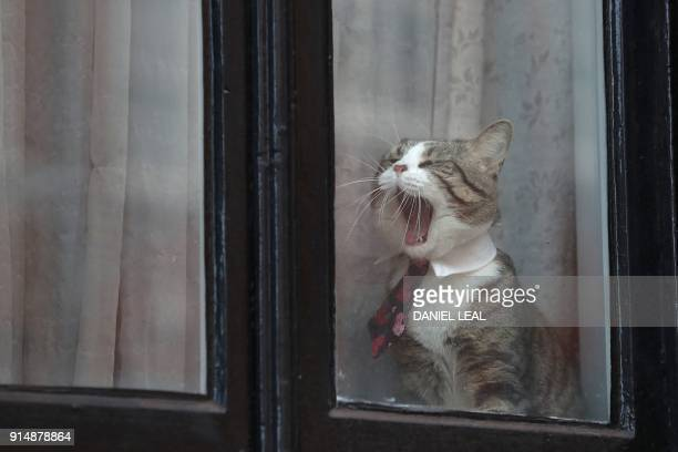 Cat named 'James' wearing a collar and tie yawns by the window of the Ecuadorian Embassy where WikiLeaks founder Julian Assange has been hold up for...