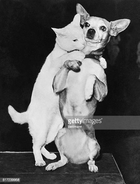 A cat named Lee surprises a Chihuahua named Frisco by giving him a hug