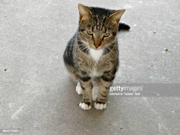 A Cat Named Rudi