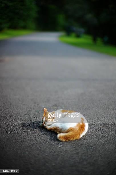 Cat nap road