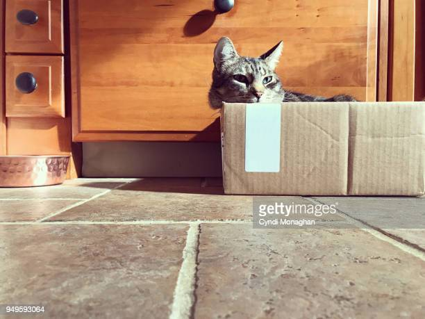 Cat Napping in a Cardboard Box