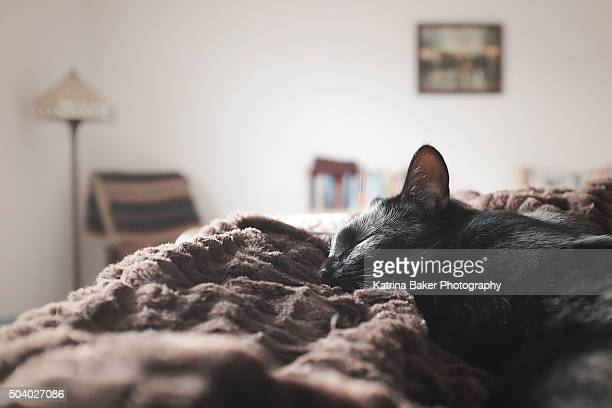 Cat Napping on Bed in the Sun