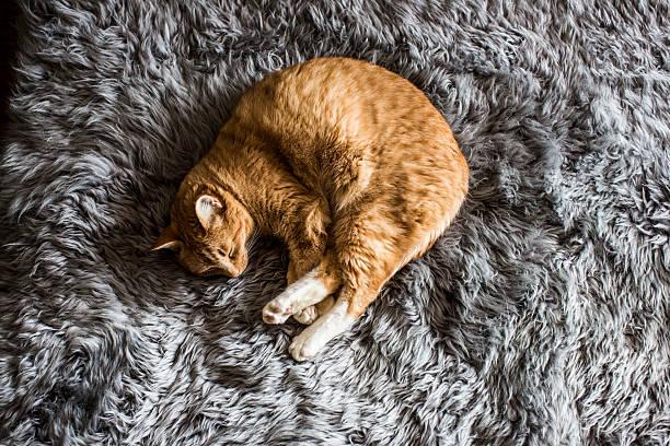 A Cat Napping Wall Art