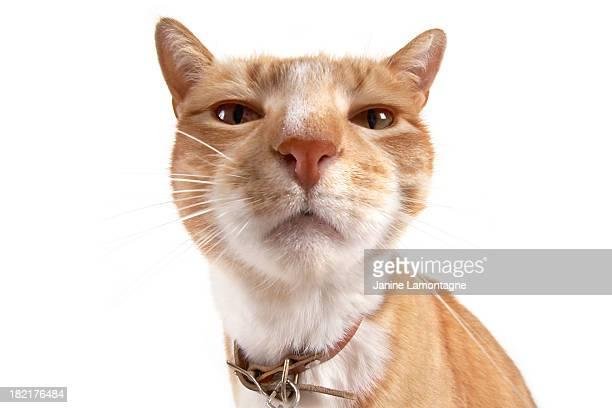 Cat nose up close
