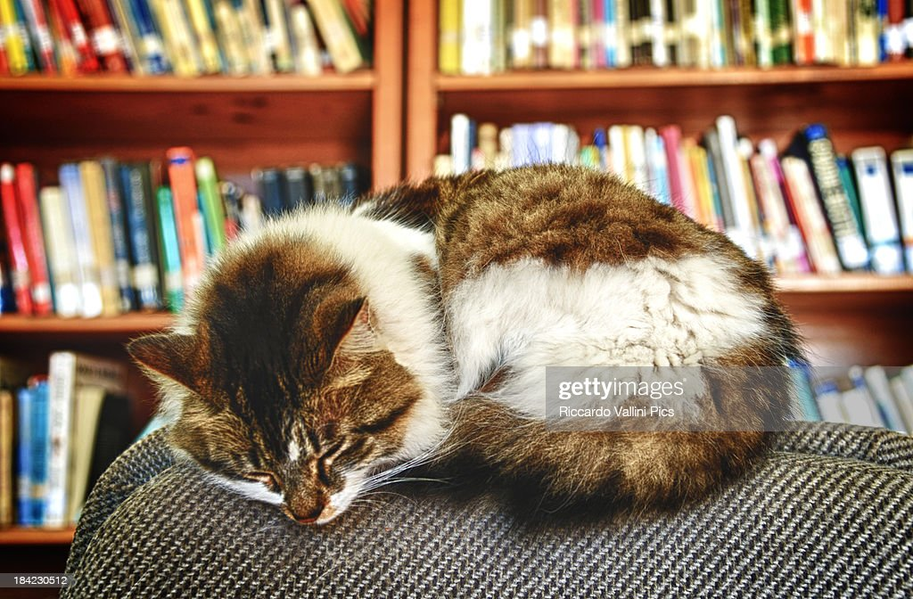 Cat of the library : Stock Photo