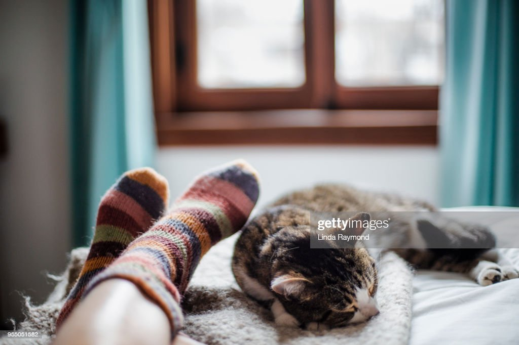 cat on a bed feet of a person : Stock Photo