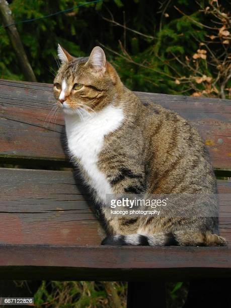 Cat on a bench